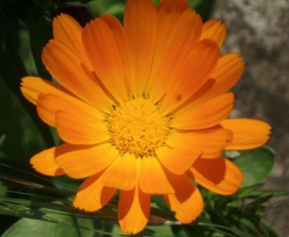 Wacky World of Wildflower