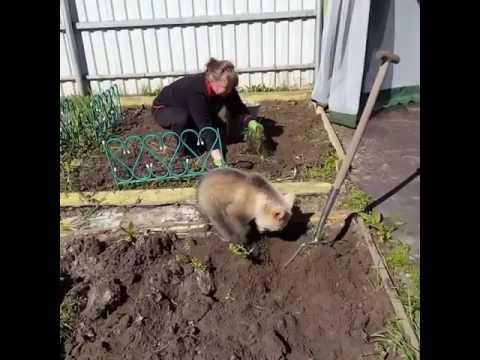 畑仕事を子熊が手伝い?