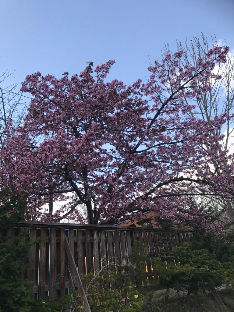 道東にも春