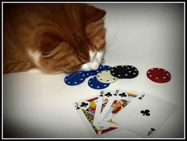 使わない場合遊べるオンラインカジノが限られる