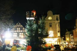 Werden-Weihanchtsbäume1