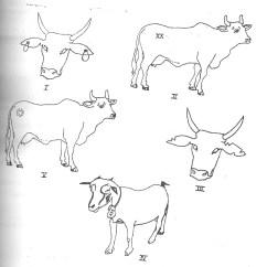 Diagram Of Farm Animals Mitsubishi Lancer Audio Wiring Agricultural Science 3 Nov Dec 2009
