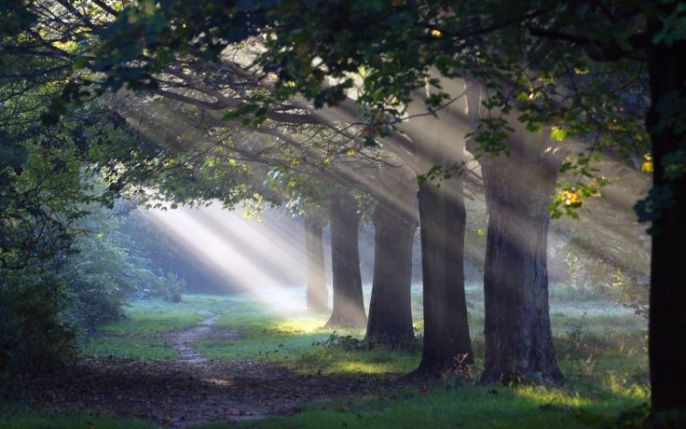 Sunlight shining through trees onto a forest path.