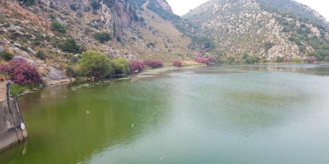 تحول لون مياه بحيرة عيون السمك الى اللون الأخضر والأهالي ناشدوا المعنيين التحرك