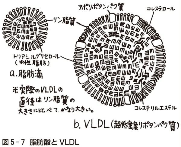 脂肪酸とVLDL