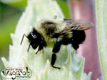 Bee #1.