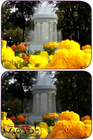 Et ces deux dernières photos de la fontaine.