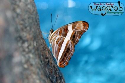 Butterfly House, Detroit Zoo - Copyright Robert Hartwig 2013, wagarob.wordpress.com