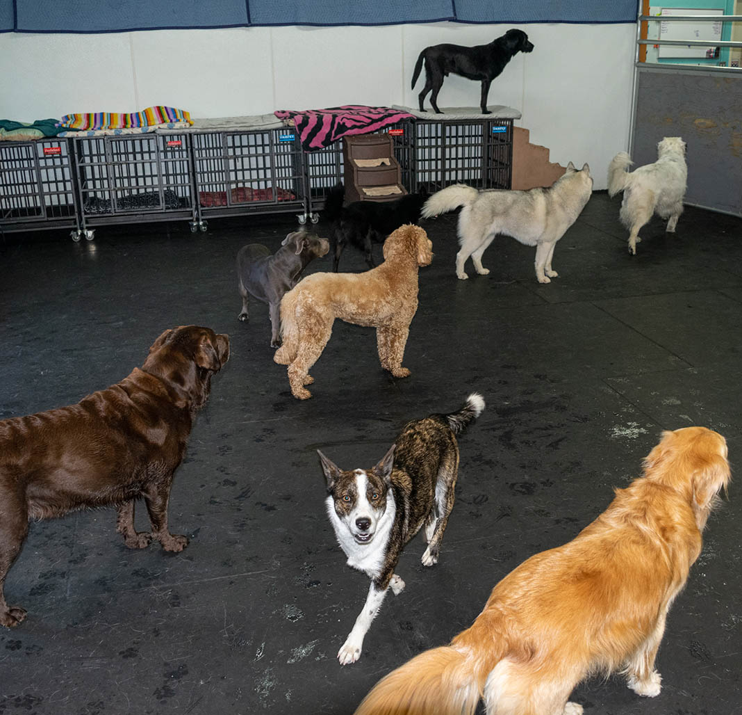 doggy daycare services