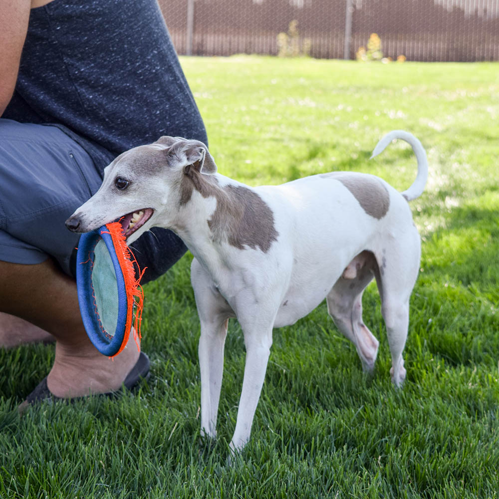 bugsy playing frisbee