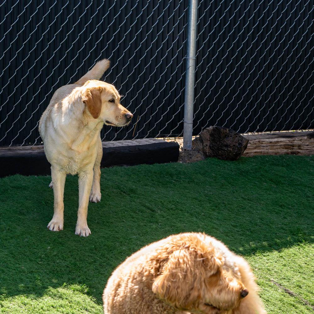 doggy daycare bend oregon