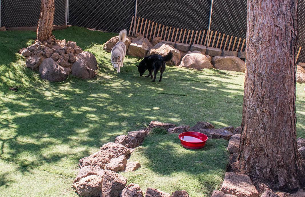 free range dog daycare bend oregon