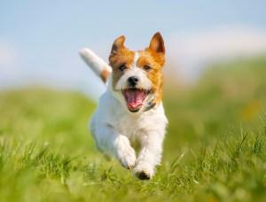 Detox Your Pets