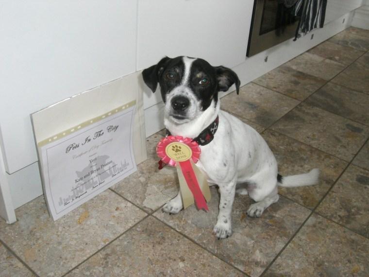uri rescue dog
