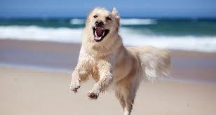 dog unning on a beach