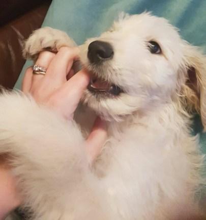 Luca 11 weeks