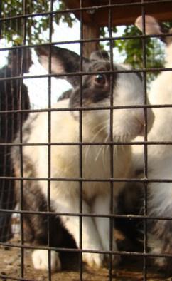 rabbits (2)