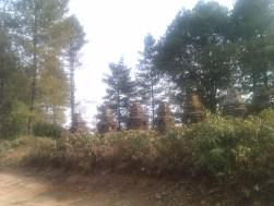Chhortens at Mudhe village, Dolakha district