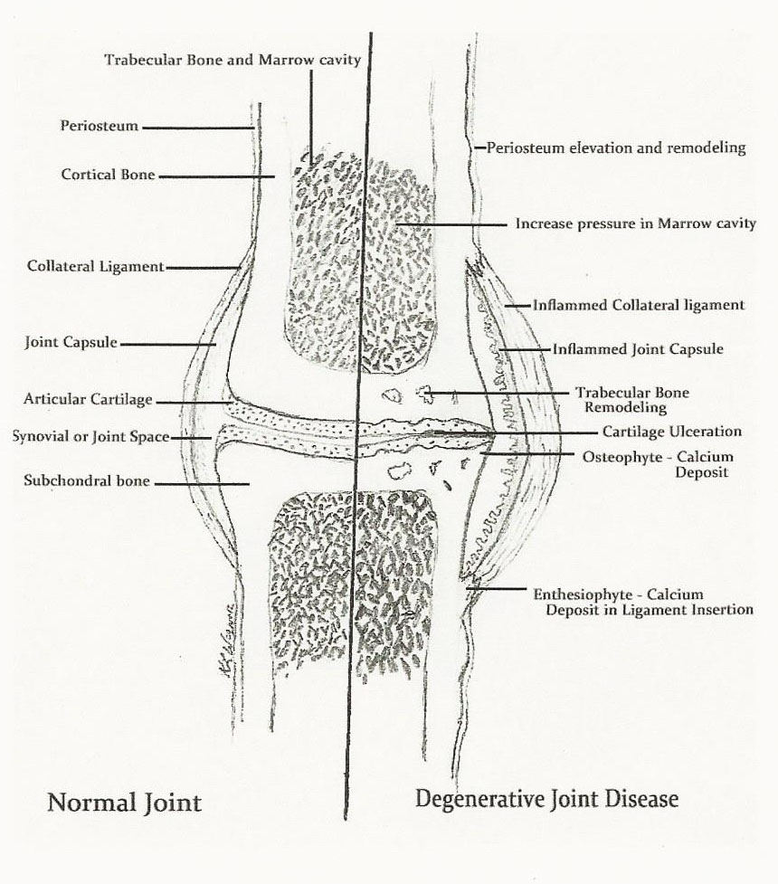 hight resolution of equine lameness is it preventable