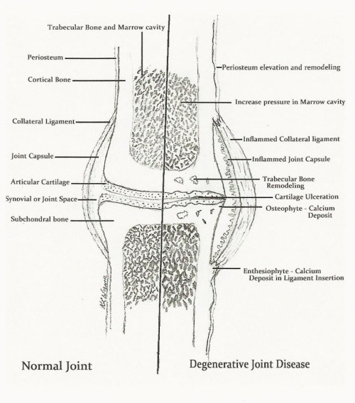 small resolution of equine lameness is it preventable