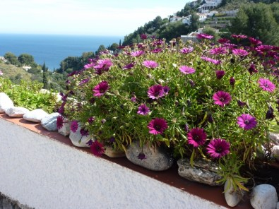 Flowers, Sea and Mountain!