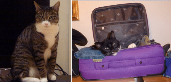 House sitting in London England. Charlie and Monty loved our suitcases.
