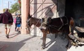 A working Donkey in Marrakech Medina