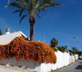 Almuñécar Spain - January Flowers