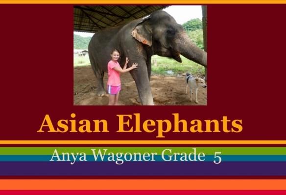 Anya Asian Elephant Presentation