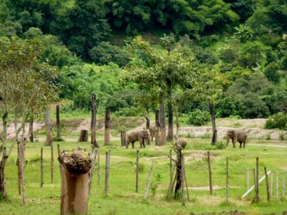 Elephant Nature Park - Chiang Mai Thailand - Save Elephant Foundation (3)
