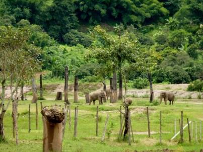 Elephant Nature Park - Chiang Mai Thailand - Save Elephant Foundation (3)