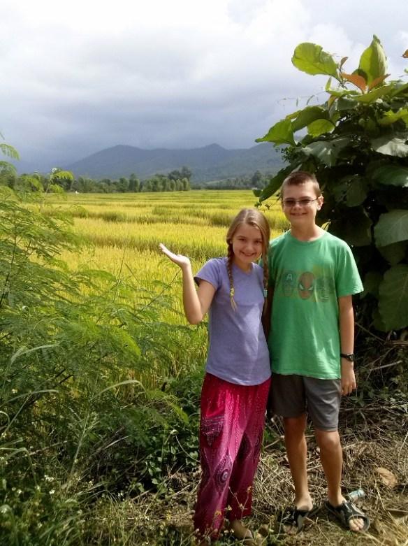 Pai Thailand - Around Town Rice Paddies