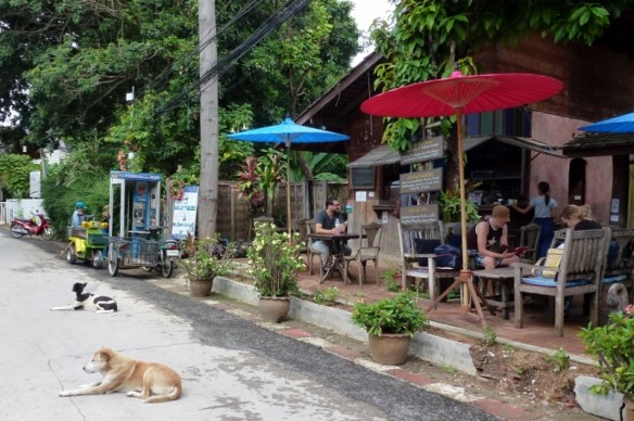 Pai Thailand - Walking Street with lazy dogs