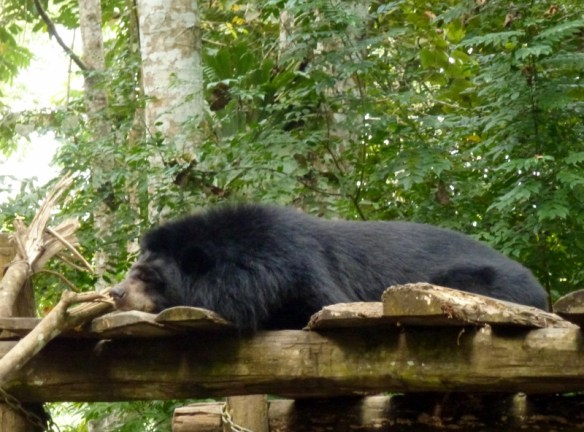 Kuang Si Waterfalls - Bear Rescue