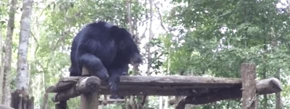 relaxing-lao-bear