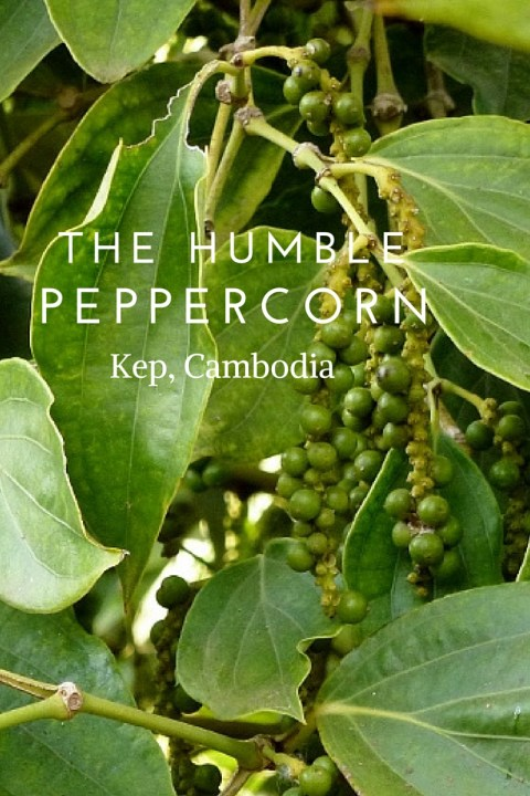 The Humble Peppercorn Kep Cambodia