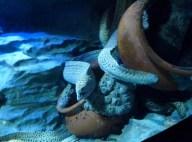 SEA-Aquariuam-Experience-12
