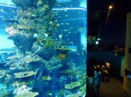 SEA-Aquarium-Experience-14