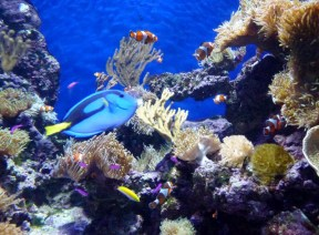 SEA-Aquarium-Experience-22