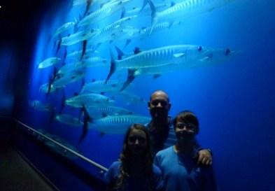 SEA-Aquarium-Experience-23