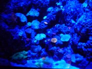 SEA-Aquarium-Experience-24