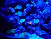 SEA-Aquarium-Experience-24