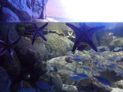 SEA-Aquarium-Experience-26