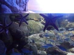SEA-Aquarium-Experience-26