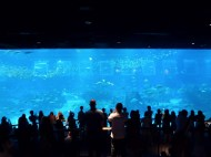SEA-Aquarium-Experience-29