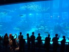 SEA-Aquarium-Experience-32