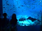 SEA-Aquarium-Experience-35