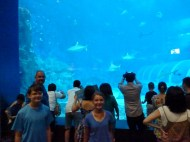 SEA-Aquarium-Experience-4