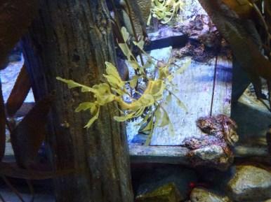 SEA-Aquarium-Experience-44