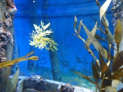 SEA-Aquarium-Experience-45